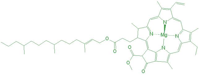 chlorophyll molecule