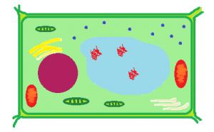 garlic cell